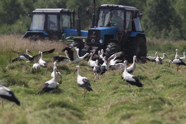 Белорусское экономическое 'чудо-юдо': Почему колхозно-совхозная система проигрывает частнику?