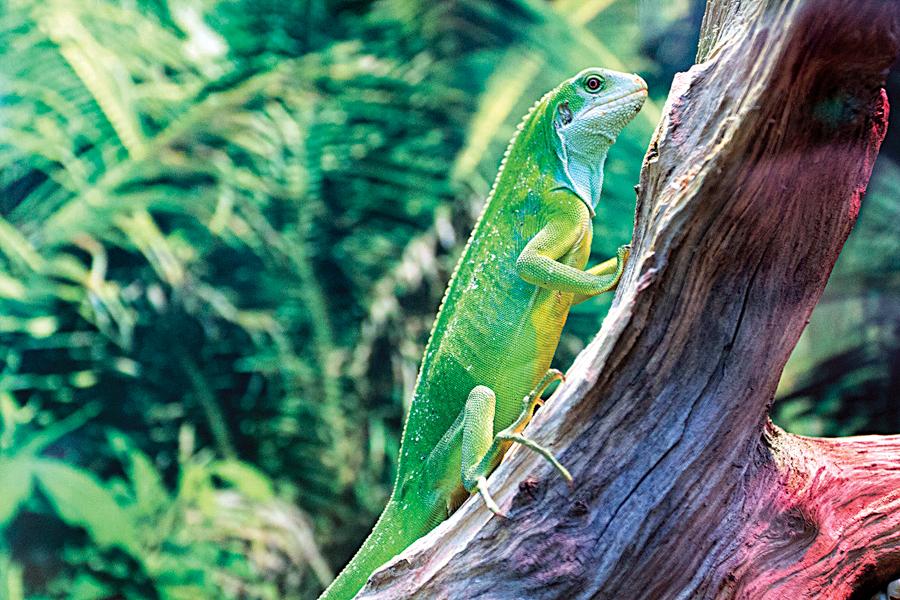 Змеи, ящерицы, экзотические попугаи… Кого и для чего нужно регистрировать в Минприроды