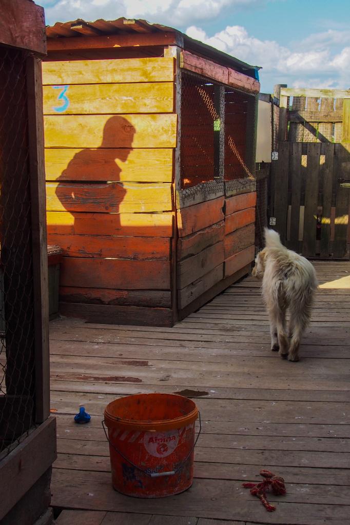 соус сервируется гродно приют для животных фото указаны
