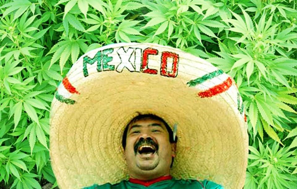 Легализация марихуаны в мексике как провести марихуану